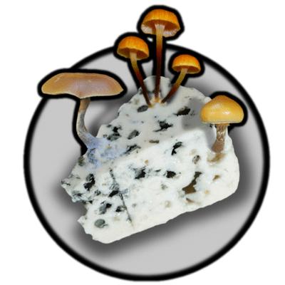 Photo de Mycéliums